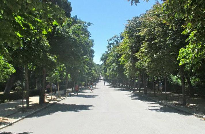 Parkway-Trees-Europe