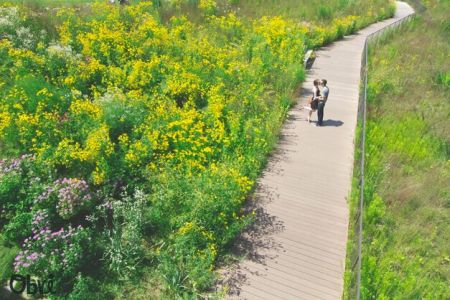 Couple-on-path-flowers